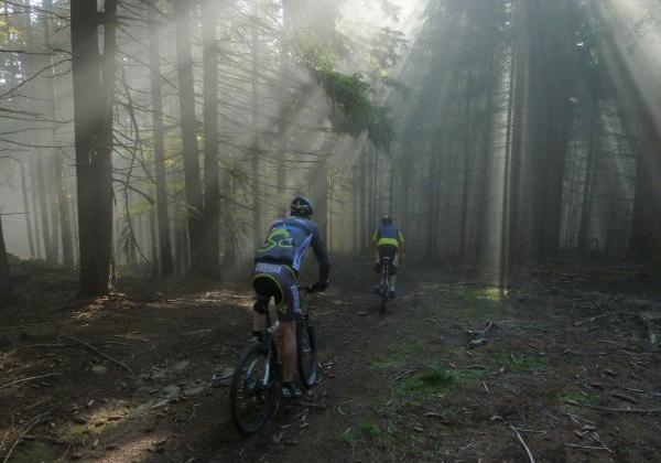 Rolands Fotos, Wald Nebel